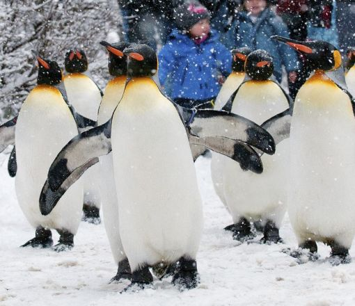 Our recommendation for colder days: Penguin parade at Zurich Zoo