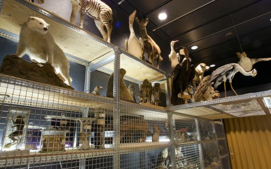 Zoological Museum Zurich